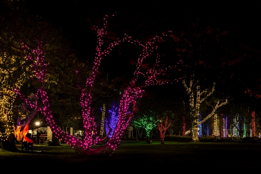 Durban Botanic Gardens Trail of Lights 2019