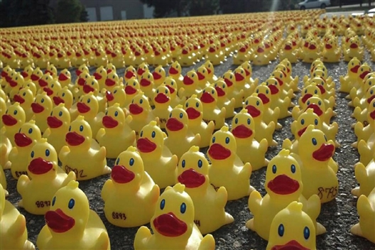 Day at the duck race