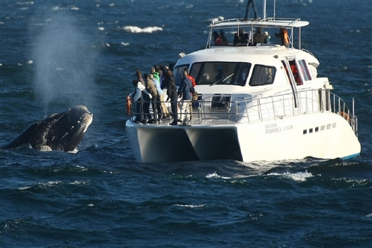 Private Hermanus Wine & Whales