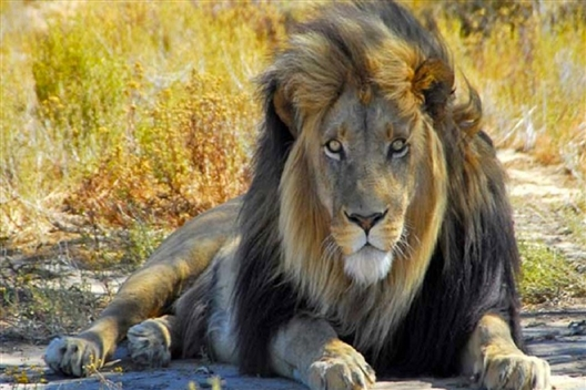 Scheduled Cape Big 5 Safari