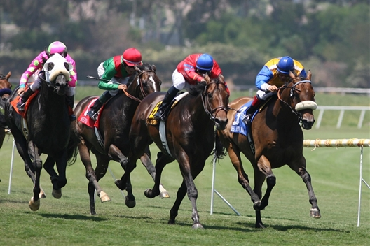 Western Cape Equine Trust Annual Fundraising Race Day